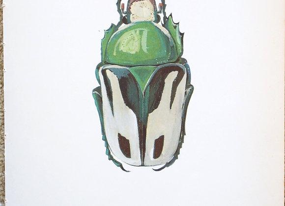 עמוד מתוך מדריך ישן נושן על חיפושיות #01