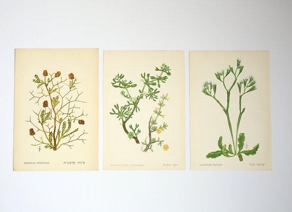 שלישיית פרחים 07