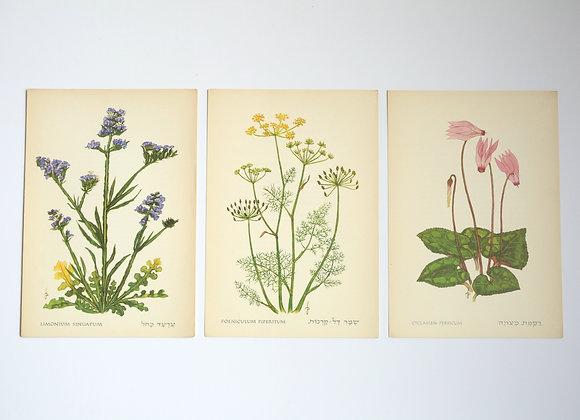 שלישיית פרחים 06