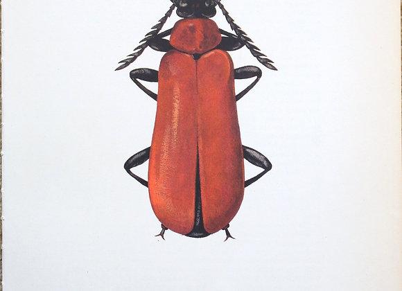 עמוד מתוך מדריך ישן נושן על חיפושיות #02