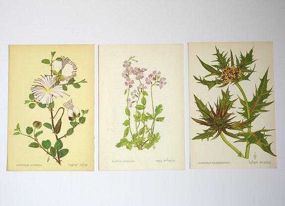שלישיית פרחים 02