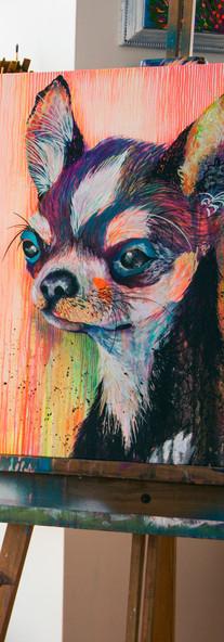 Chihuahua Rash 60 x 60 cm  Mixed Media on Canvas Quito / Ecuador 2015
