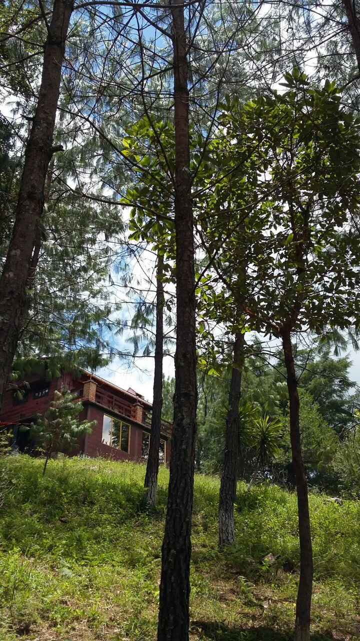 Desde el bosque