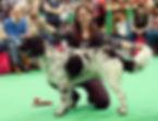 Linkon crufts 2018 copy.jpg