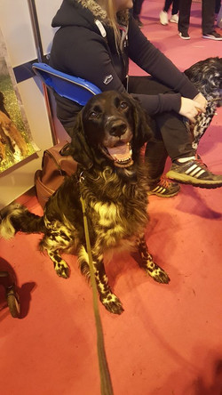 Loki at Discover Dog (Crufts) 2017