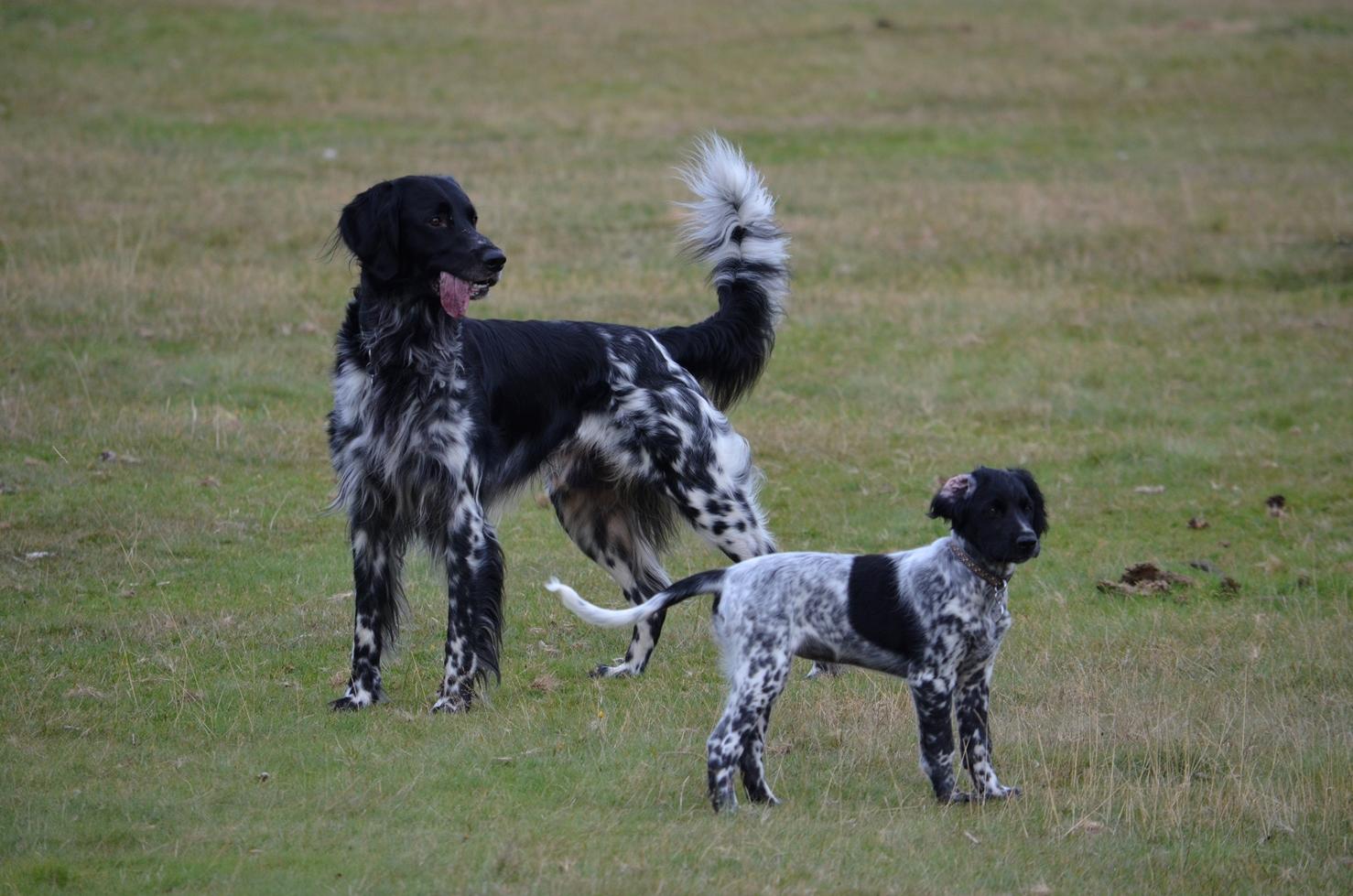 Loki and puppy Keiko