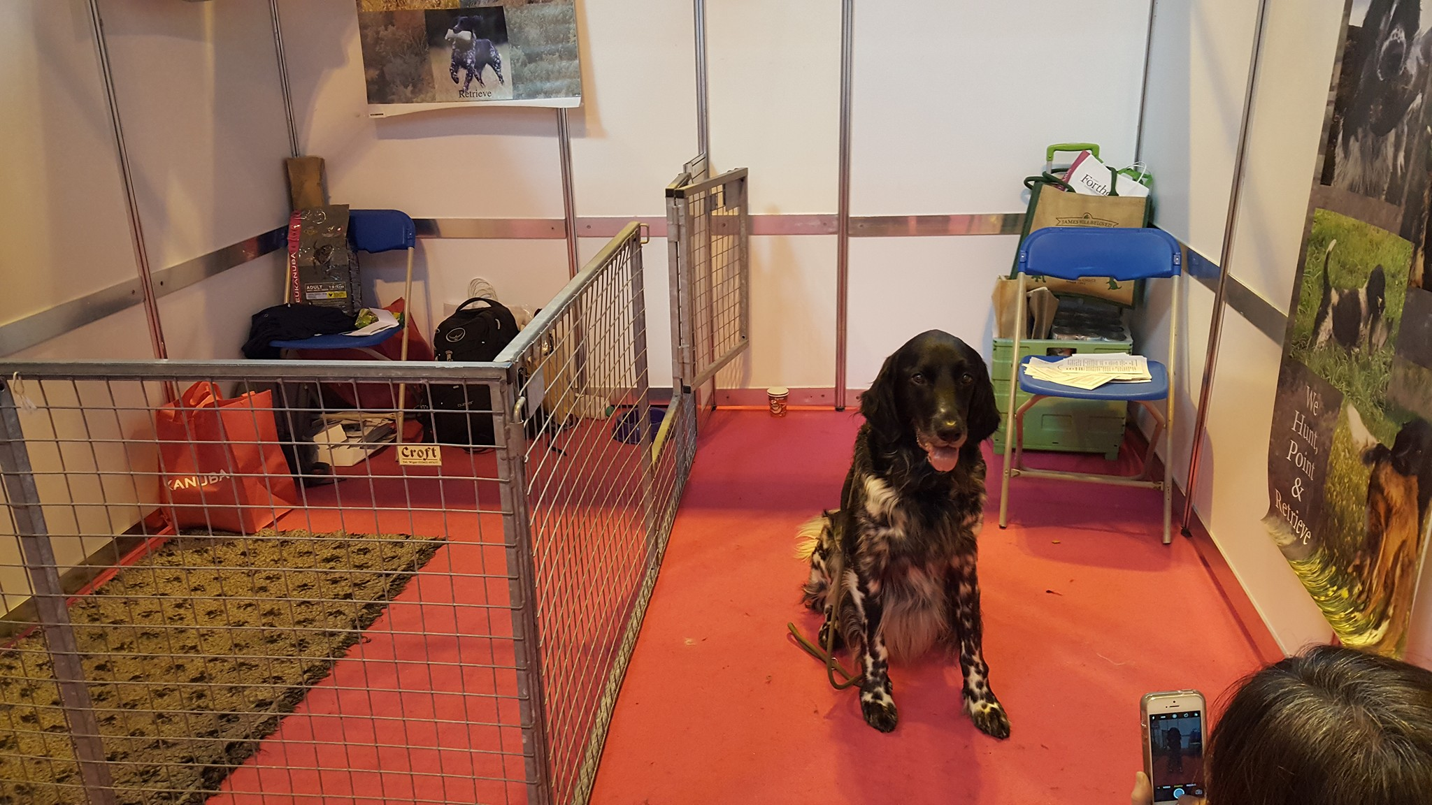 Loki on the Discover Dogs stand