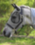 Fly Mask-Comfort Fit Grey.jpg