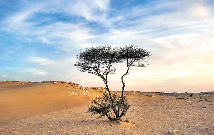 tbav-desert-tree-1355x858.jpg