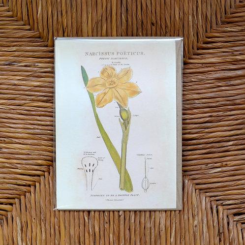 Narcissus Poeticus card