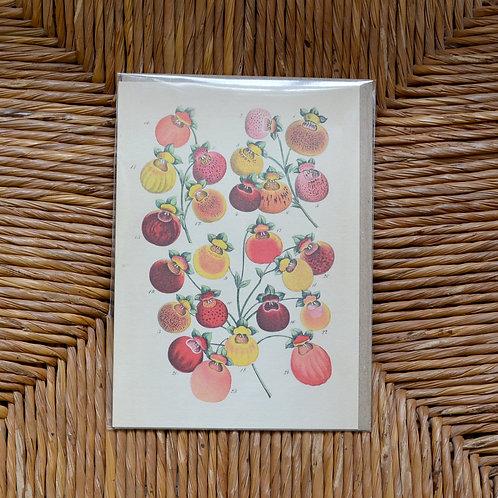 Slipper flower Card