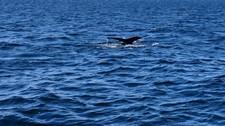 A la rencontre des baleines à Cape Cod