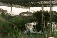 Teich 2001.jpg