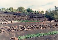 Farm 1991.jpg