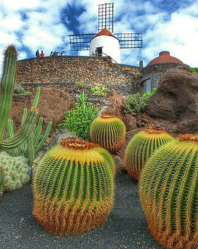 CENTRO ANTROPOSOFICO-jardin de Cactus.jp