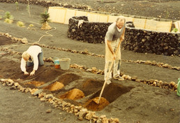 Blumenkohl November 1983.jpg