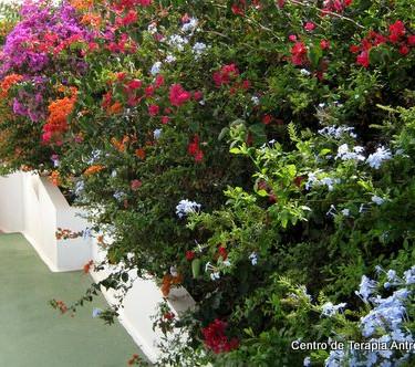 AT-jardín-02.JPG