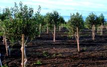 CENTRO ANTROPOSOFICO-AGRICULTURA BIODINA