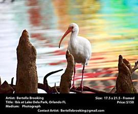 Brooking.Bertelle - Ibis at Lake Oela Pa