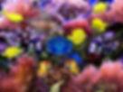 fantasy aquarium.jpg