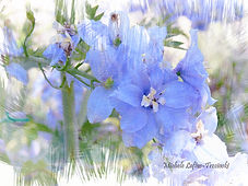 blue flower impressions.jpg