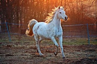 horse-2063672_1920.jpg