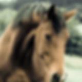 01 - horse-458410_1280.jpg