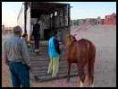 014ca-victory-transportbil-el-gouna_thum