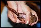 ekorn-sovende-i-hender_thumbnail 1.jpg