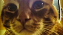 Cat Ear Mites