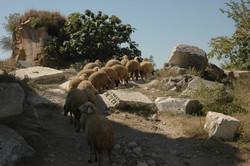 türkmenler-eray'ca (117)