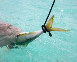 Blind Shark.JPG