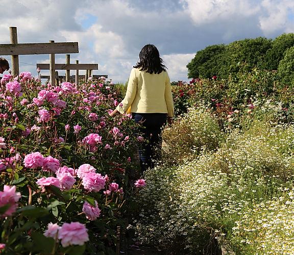 Walking through Roses