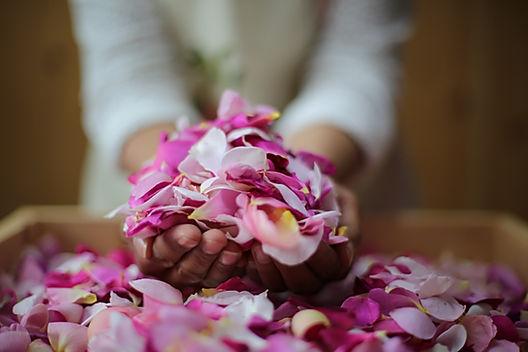 English roses, rose petals, pink roses