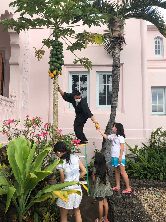 Papaya Tree - Rev. & children