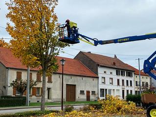 Élagage des arbres rue nationale