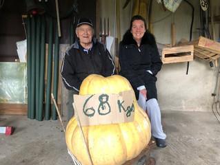 Un potiron de 68 kg dans le jardin de Gabriel SCHATZ