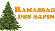 Rappel - Collecte des sapins de Noël le mercredi 6 janvier