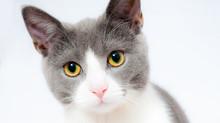 Campagne de stérilisation des chats