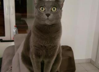 Chat retrouvé !