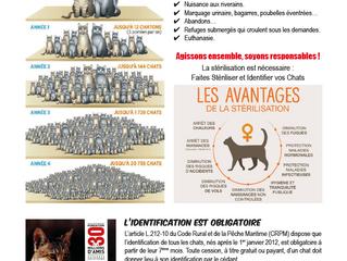 Réponses aux 2 tracts sur les chats errants