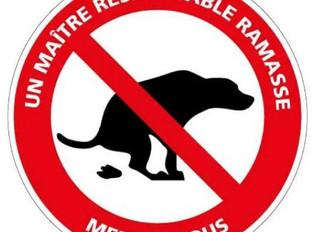 Incivilités - Déjections canines