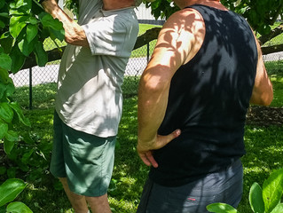 Taille au vert chez les arboriculteurs