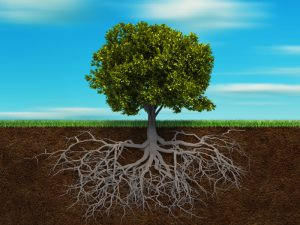 Tree with Root System