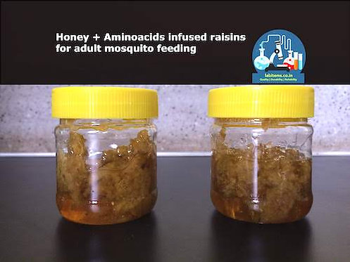 Honey and raisins for adult mosquitoes