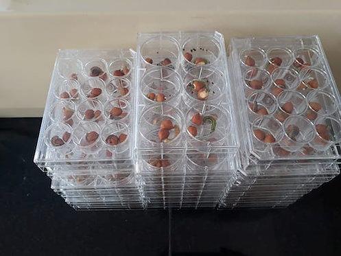 Insect Bioassay Trays (48 wells) - LI-IB-04