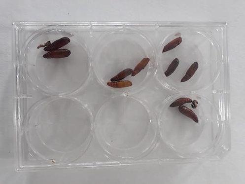 Bioassay trays for studying larvae