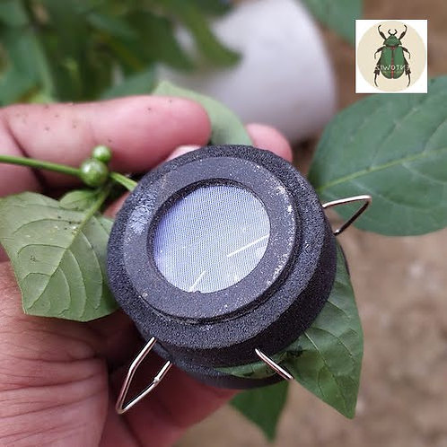 Small insect cages for plant-insect interactions