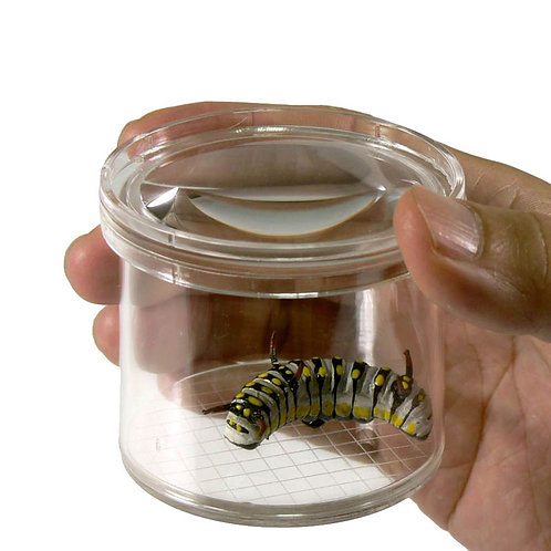 Insect viewing jar