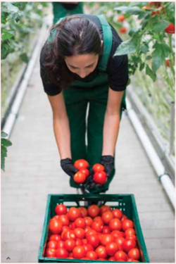 Organic Garden with Outdoor Deck